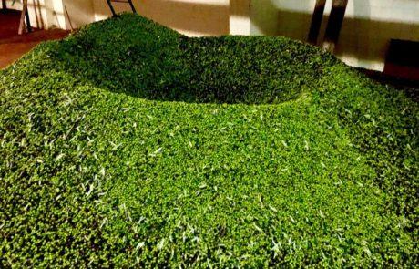 olive frantoio archibusacci
